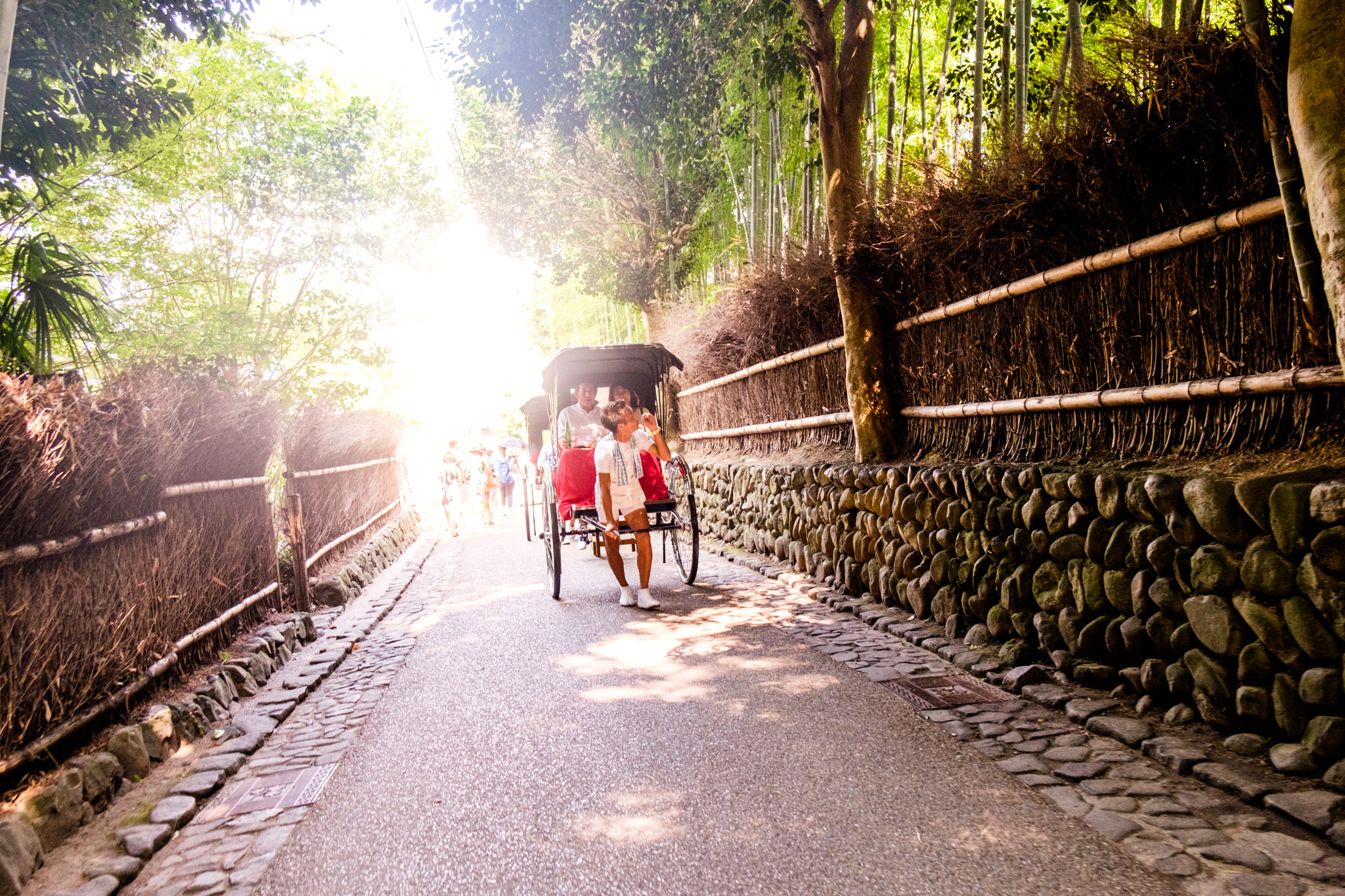 Foresta di bambù di Arashiyama